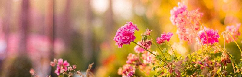 Gourmet und Garden Gartenfestival